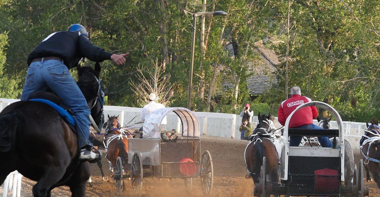 Chuckwagon Driver Faces Lifetime Ban After Horse Dies
