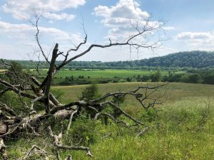 Efforts afoot to save South's disappearing grasslands