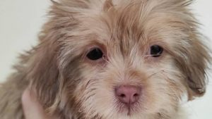 Rescued puppies sent back to Iran, shelters receive no explanation